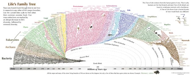 Evolutionary tree of life, from Leonard Eisenberg.